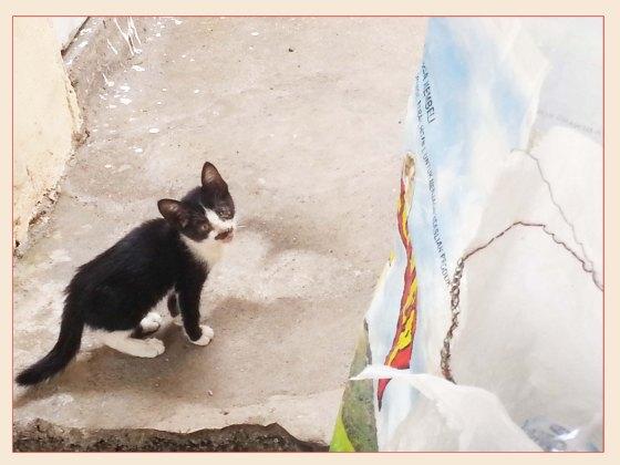 Anak Kucing ini ternyata Lumayan Lucu, adorable banget!